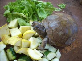St. Francis Xavier, my exotic turtle-04 by hummingbird88