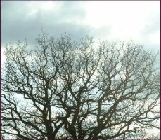 treesbeautiful sky by psychedelicurchin