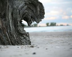 Driftwood by SoundofSanity