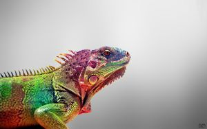 Iguana Colorful 01 by SLYELF
