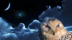 Owl in Space. by TarzoEzio