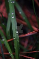 Blades of Grass by Jabberwocked33