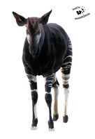 Cut-out stock PNG 95 - nice okapi by Momotte2stocks