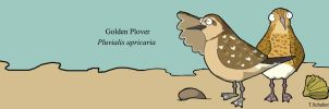 Golden plover cartoon by TobySchubert