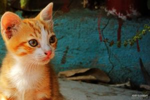 Lonly Cat from lonely by hotamr