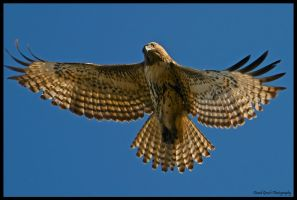 New Years Red Tail II by AirshowDave