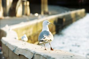suspicious gull by InjectedSmiles