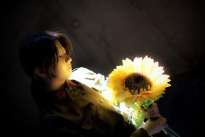 Sunflower's glow by garion