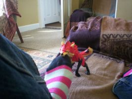 thats my sock -_- by Kitty-Krazy