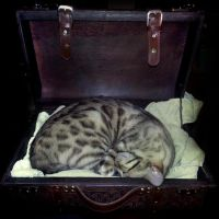 Cat in a Suitcase . by CatherinetteRings