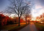 Follow The Sun by MyLifeThroughTheLens