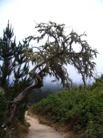 Point Lobos 4 by ifihadacoconut