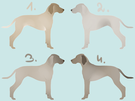 Weimaraner Adoptables CLOSED by i3nici