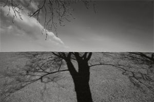 Tree and shadow of a tree by afewimages
