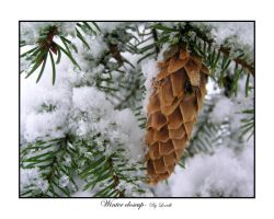 Winter closeup by lexidh