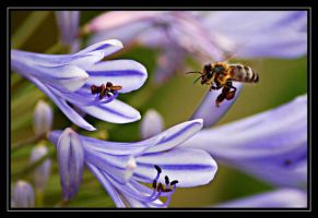 Flight Of The Bee by AdamsWife