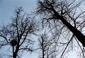 The watching trees by gmtb-stock