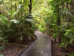 Pathway Out of the Forest by Angel-Dust-Ryuuki