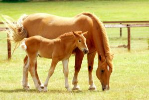 Suffolk Punch Mare and Foal by Shadow-and-Flame-86