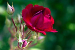 From The Garden 15 by Pablo-Toledo
