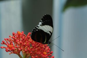 other black beauty by marob0501
