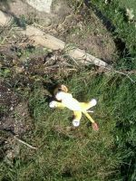 Simba fell out of a tree/bush thing :P by Heatherannpt