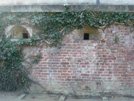 ivy wall by two-ladies-stocks
