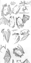 Wittle bat sketches by batlesbo