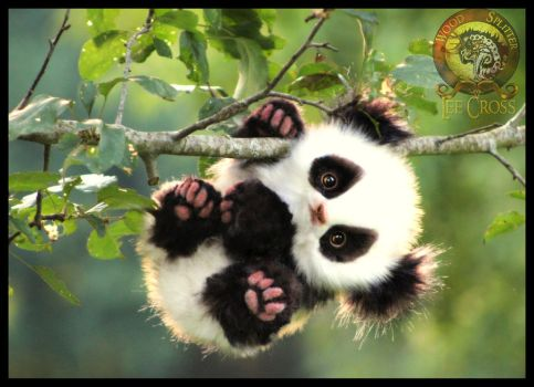 SOLD  HANDMADE Poseable Baby Panda! Glummy-Bear! by Wood-Splitter-Lee