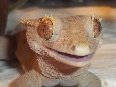 THE HAPPY GECKO by Heather-Chrysalis