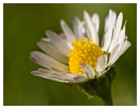 Bug and its flower by de1ete