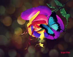 Colourful Rose by IgnisFatuusII