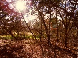 The Woods 2 by TheGerm84