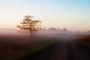 Untroubled Mist by dragon-fly-to-me