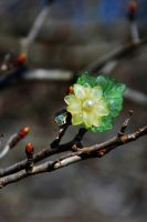 Full Bloom Ring by nazzara