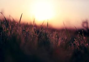 sunrise by photoflake