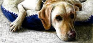 Labrador - Gregory by foil-duck
