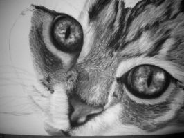 WIP Charcoal Cat Face 4 by emollience