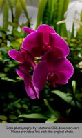 Stock Flower 8138 by photoman356