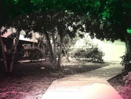 PInk Light In The Green Trees by rocker409