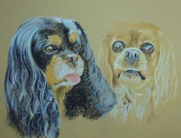 Cavalier Spanials by resistanceispointles