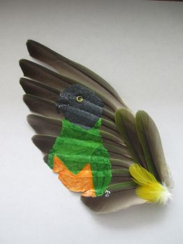Senegal Parrot Feather Painting by MadalynC
