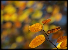 Unsharp autumn background by pagan-live-style