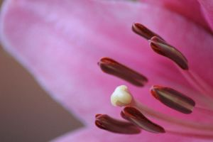 Stamen by Tamamantix