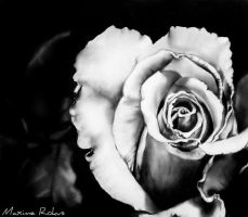 Drawing Rose by maximerokus