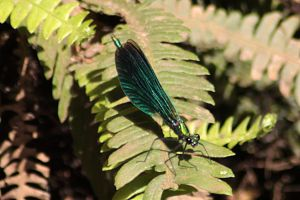Damsel fly by lwernham