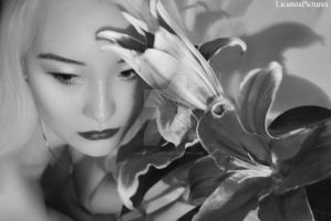 Lilies by LicamtaPictures