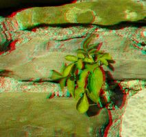 Small plant anaglyph by mrkane27