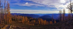 Larch Meadows Pano by jasonwilde