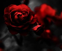 Rose by coulombic